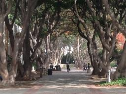 UCLA840.jpg